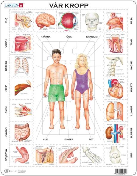 kroppen tegning fettkul på magen